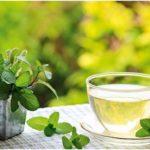 чай и мята на фоне природы