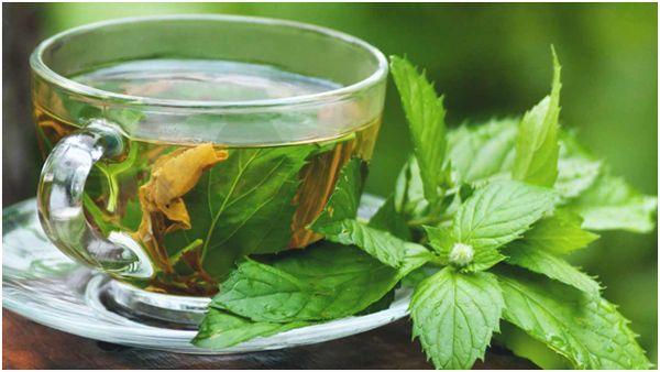 чашка чая с мятой