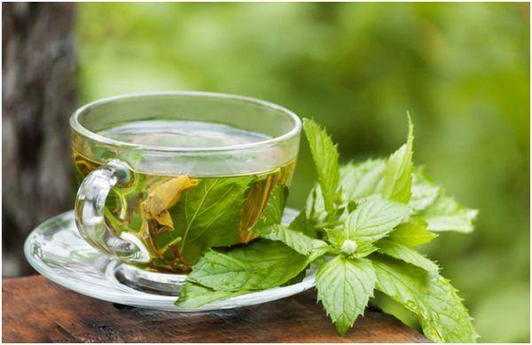 мятный чай на фоне леса
