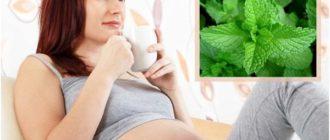 беременная женщина с мятным чаем