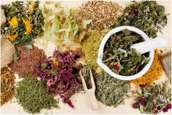травы для чая