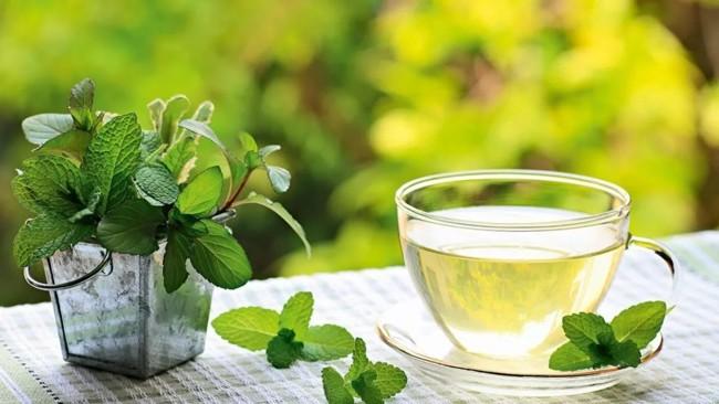 чашка чая с мелиссой